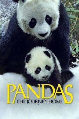 პანდები: შინ დაბრუნება (ქართულად) / pandebi: shin dabruneba (qartulad) / Pandas: The Journey Home