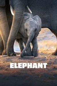 სპილო (ქართულად) / spilo (qartulad) / Elephant